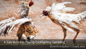 A Sure Victory in Playing Cockfighting